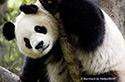 WWF Mitglied